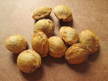Apricot Seeds. Royalty Free Stock Photography
