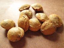 Apricot Seeds. Stock Photos