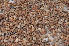 Apricot seeds Royalty Free Stock Photography