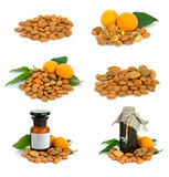 Apricot stone. Stock Images