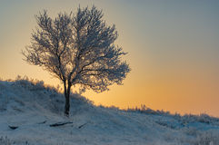 Apricot tree on a hill at winter season Stock Image