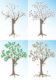 Apricot tree and the seasons.Background. Stock Photography