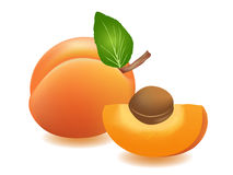 Apricot. Vector illustration. Apricots with leaf and seed Stock Images