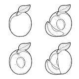Apricot. Vector Illustration Hand Drawn Fruit Cartoon Art Royalty Free Stock Photos