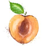 Apricot vector logo design template. fruit or food vector illustration