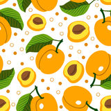 Apricot. Vector seamless background with apricots. Stock Photos