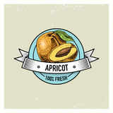Apricot Vintage, hand drawn fresh fruits background, summer plants, vegetarian and organic citrus and other, engraved. Stock Photography