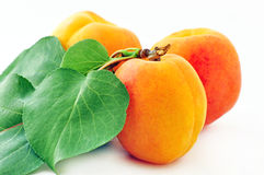 Free Apricots Stock Photography - 19828642