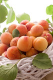 Apricots. Fresh sweet apricots in the basket (vertical Stock Photos