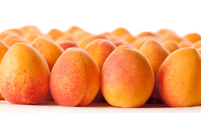 Apricots. Many fresh ripe apricots in rows royalty free stock photos