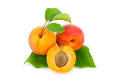 Apricots. Stock Photos
