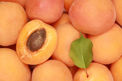 Apricots. Ripe Apricots with leaves forming a background stock image