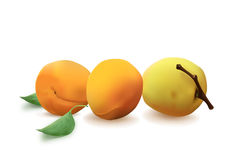 Apricots Stock Images