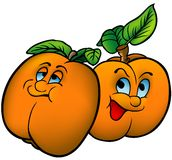 Apricots. Highly detailed and coloured cartoon vector illustration royalty free illustration