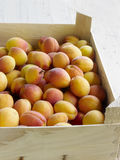 Apricots  Stock Image