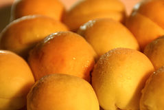Apricots. Fructus armeniacus - Apricot from Ararat Valley Royalty Free Stock Photos