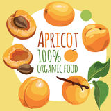 Apricots on an abstract background. Food. eat . fruit stock illustration