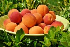 Apricots, Apricot, Fruit, Fruits Stock Photography