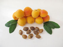 Apricots. Royalty Free Stock Image