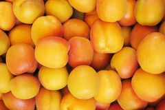 Apricots - apricots Royalty Free Stock Image
