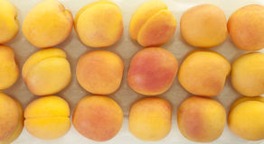 Rows of Yellow Apricot Royalty Free Stock Image