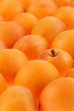 Apricots background, full frame Royalty Free Stock Photos
