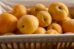 Apricots in a Basket Stock Image