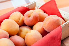Apricots in the basket. Fresh and ripe apricots in the basket, still life Royalty Free Stock Photo