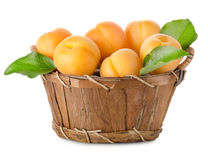 Apricots in a basket isolated Royalty Free Stock Image