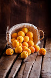Apricots in basket. On a rustic wooden table and dark background Royalty Free Stock Image