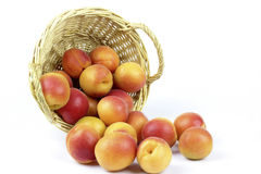 Apricots in the basket Stock Images