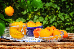 Apricots boil under the apricot tree Royalty Free Stock Images