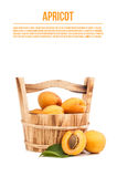 Apricots. In bucket on white Stock Photos