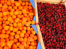 Apricots and cherries. Fresh juicy apricots and cherries at local market Stock Images
