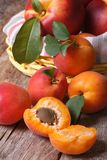Apricots close-up on a background of a basket of fruit  vertical. Apricots close-up on a background of a basket of fruit on the table. vertical Royalty Free Stock Image