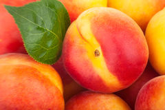 Apricots closeup Royalty Free Stock Images