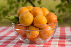 Apricots. Closeup of ripe and fragrant apricots in a glass plate on a table with a checkered tablecloth in the garden stock image