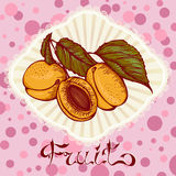 Apricots color drawing card Stock Photos