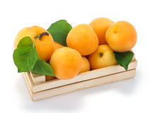 Apricots in a crate Royalty Free Stock Photos