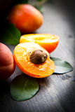 Apricots on a dark wood background Stock Photography