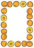 Apricots frame on white fruit illustration Royalty Free Stock Images