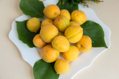 Apricots. Fresh apricots from my garden. And believe me they are very tasty Royalty Free Stock Photo