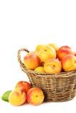 Apricots fruit Stock Image
