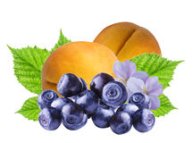 Apricots fruits and fresh bilberries ,  isolated. On white background Royalty Free Stock Image