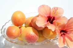 Apricots in glass bowl. Sweet Apricots in bowl with Hibiscus flowers beside Stock Photos