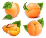 Apricots with green leaves Stock Image