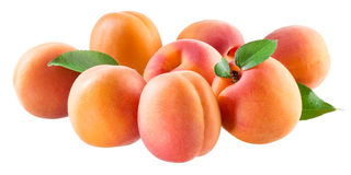 Apricots. Group of ripe fruits isolated on white Stock Photos