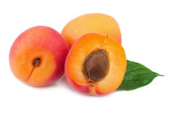 Apricots Isolated on White Royalty Free Stock Image