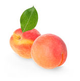 Apricots isolated on a white royalty free stock image