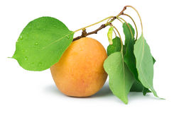 Apricots and leaf white isolated Stock Photo
